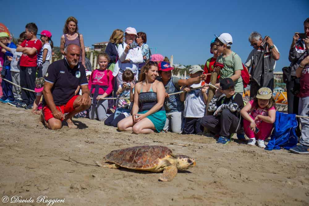 "Liberata la tartaruga marina ""Caretta caretta"": le splendide immagini di Davida Ruggieri"