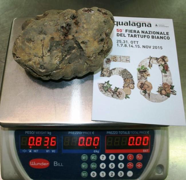 Il tartufo da 836 grammi