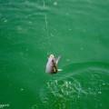 Pesciolino fuor d'acqua... tranquilli è stato rilasciato