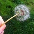 Esprimi un desiderio e soffia…
