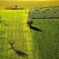 Colline Picene