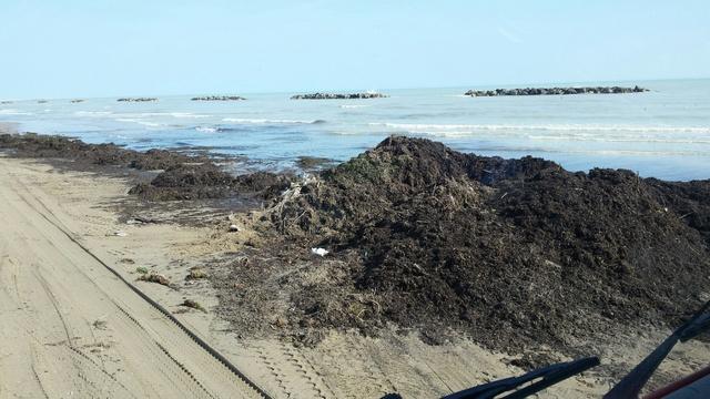 Spiaggia: Picenambiente al lavoro