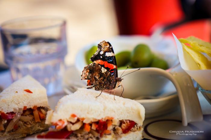 La felicità è come una farfalla...