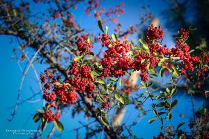 La campagna si veste con i colori dell'autunno