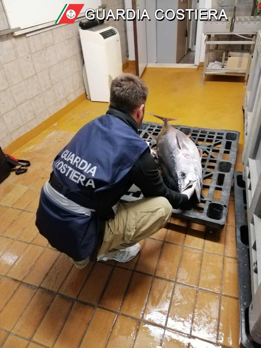 La Guardia Costiera sequestra circa 253 Kg di pescato e un esemplare di tonno rosso