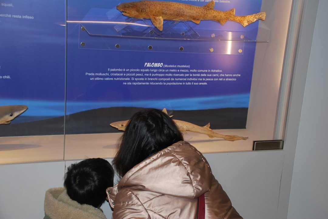 Anche il Museo del Mare riapre i battenti