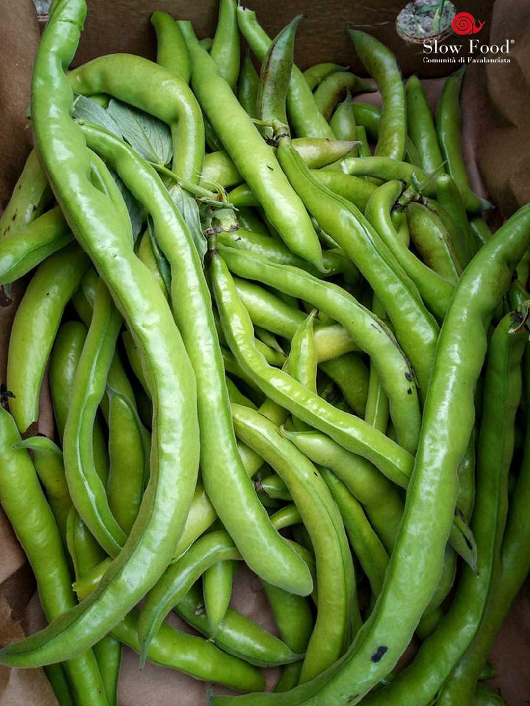 Favalanciata, le sue fave verranno seminate in Sudafrica